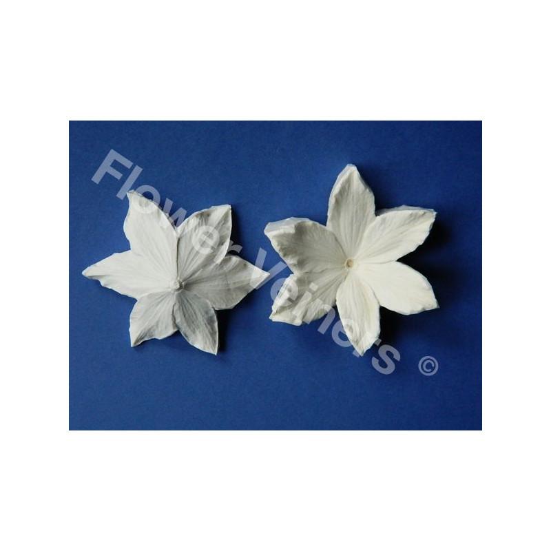 Molde silicona Flor Clemátide